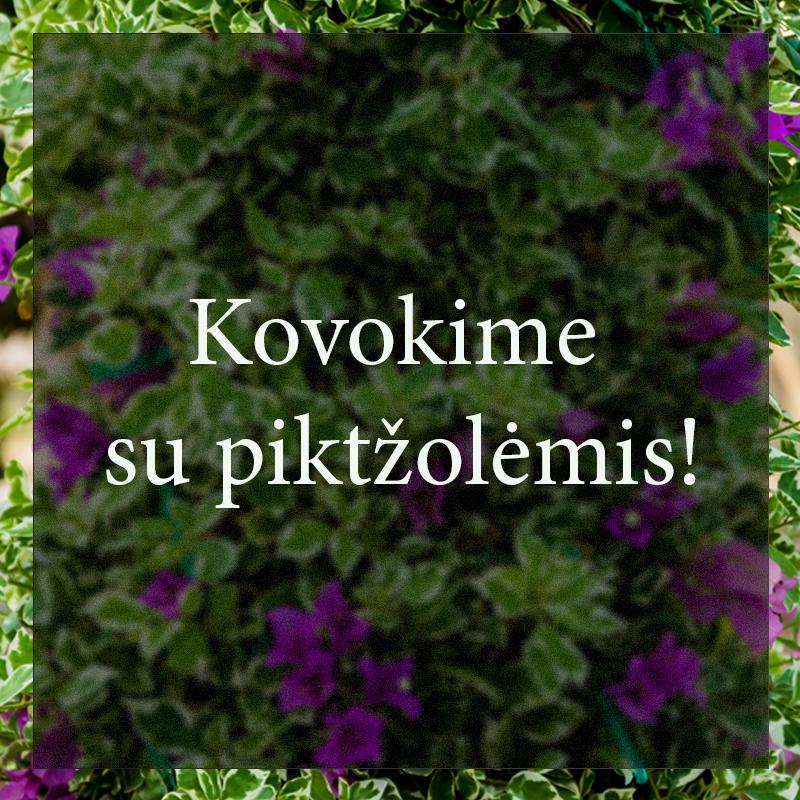 Vybornų medelynas - Kovokime su piktžolėmis